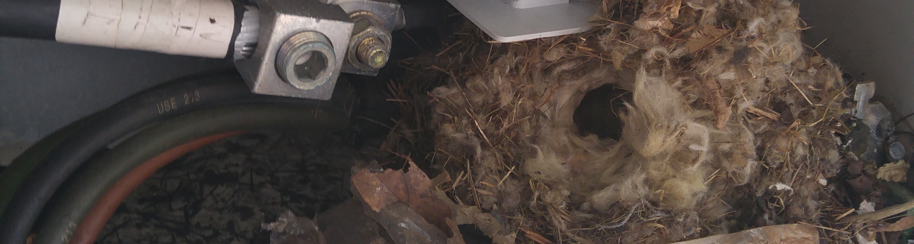 Mouse Nest in Generator
